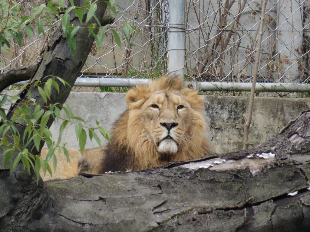 Free zoo in Lyon